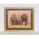 Framed Glass Fronted Picture of Elephants by J Meets